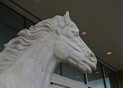 Trapped in Marble (BKHagar *Kim*) Tags: horse statue store al huntsville fierce auction alabama marble expensive equine bkhagar