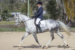 IMG_9137 (gavinglis) Tags: horses horse equestrian equine tamworth dressage