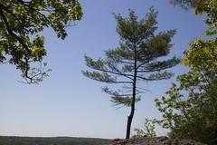 Pine (Jeff Coons) Tags: park usa america canon ma eos us unitedstates state hiking massachusetts united unitedstatesofamerica wells hike m sp states wellsstatepark eosm canoneosm wellssp