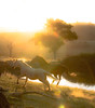 Wild spirits - golden light (photo obsessed) Tags: horse animal animals australia nsw newsouthwales oceania trunkeycreek