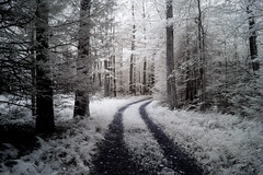 Ghost Trail (Thomas James Caldwell) Tags: park forest ir woods carriage state pennsylvania run eerie spooky pa trail infrared atmospheric hickory 2014