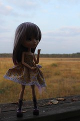 So high (Dormouse Rose) Tags: hello new autumn doll kitty verona wig pullip fmd