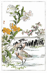 Showy Japanese lily, morning-star lily, China rose and northern lapwing (Japanese Flower and Bird Art) Tags: china flower bird art rose japan japanese book lily picture rosa lapwing northern lilium woodblock nihonga morningstar chinensis liliaceae showy rosaceae kono vanellus concolor speciosum charadriidae readercollection bairei