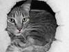 Snuggled In (Selective Color) (gtncats) Tags: blackandwhite bw pet tabby selectivecolor autofocus felinefaces greatphographers vg~catsgallery photographyforrecreation infinitexposure