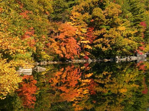 Orange Tree Reflection