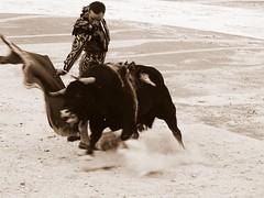 Juan Bautista (aficion2012) Tags: arles goyesca goyesque corrida france francia bullfight toro bull toreau juan bautista torero matador monochrome bw nb sepia