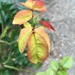 Foto 286 thumbnail