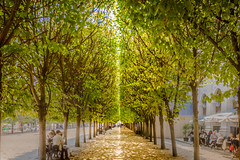 Bifurcated by Sunshine - reworked (RCARCARCA) Tags: france people jardin splittone canon 2470l palaisroyal alley pathway paris divided birfurcated 5diii sunlight walkway trees sky 2016