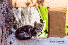 in the shadows (Carlos Lobo) Tags: casinha gatos cat cats shadow