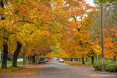 "Fall At It's Best (jimgspokane) Tags: autumn fall parks trees spokanewashingtonstate ""nikonflickraward"" naturewatcher today´sbest"
