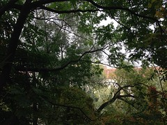 October 15, 2016 15:01:38 (Natascha W) Tags: autumn fall fallfoliage fallcolors autumncolors leaves trees tree bume baum bltter herbst herbstfarben natur nature graz mur murufer riverbank afternoon nachmittag ste branches