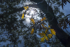 Luces ... (Vctor.M.Chacn) Tags: dmcfz1000 fz1000 vctormchacn rboles luces
