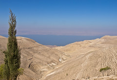 Menschenleer / Deserted (schreibtnix) Tags: reisen travelling jordanien jordan landschaft landscape wste desert totesmeer deadsea baum tree tal valley himmel sky blau blue olympuse5 schreibtnix