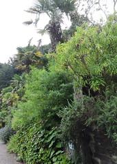 Overbecks Sept 2016 (stiffado) Tags: views bamboo subtropical succulents cobwebs euphorbia