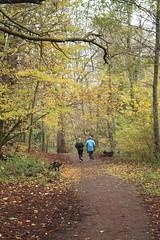 IMG_8976 (Geoff_B) Tags: badockswood bristol walkinthewoods autumn november unprocessed unedited