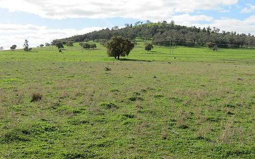 Roselea 180 Arthurville Road, Geurie NSW 2818