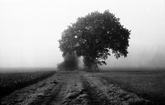 morning dust (salparadise666) Tags: moskva 2 ilford fp4 caffenol rs nebel landschaft nature tree niedersachsen germany calenberger land hannover herbst nils volkmer monochrome bw black white contrast