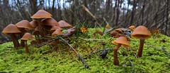 Mushrooms (J. Roseen) Tags: fungus mushrooms svampar stump treestump stubbe nature natur lumia950 pureview windowsphone