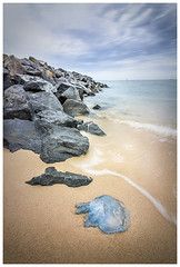 Blue Blubber washed up (JakaPH Photography) Tags: colour color landscape seascape sea beach jellyfish wildlife animal shore beached washed up cleveland qld queensland australia rocks long exposure lee little stopper nd 6 filter day daylight blue blubber sand waves water dying dead