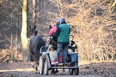 Chief (ALok fotografie) Tags: horse koets rijtuigen rijtuig hond paarden paard horses 2016 december december2016 bos nederland netherlands holland day daytime nature natuur veluwe gelderland europe europa carriage coach horsedrawn paardenkoets huisdier hund perro chien nikkor nikon nikond7200 7200