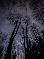 Forest under the stars (Robert Bauernhansl) Tags: tree trees baum bume nacht nigt dark dunkelheit stars sterne licht dunkel light shining austria linz