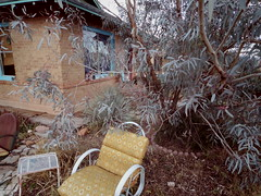 house built 1914, eucalyptus tree planted 2001 (EllenJo) Tags: pentaxqs1 december9 2016 december ellenjoroberts ellenjo home clarkdalearizona house bungalow eucalyptus lowerclarkdale arizona historic