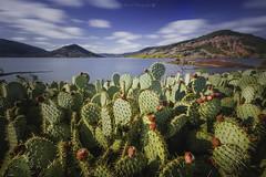 Cactus [Explore]@Lac du Salagou (Benjamin MOUROT) Tags: bleu benjaminmourot canon70d 1022mm photoshopcs6 lightroom6 nature landscape paysage view pov poselongue longexposure retardateur lente filtre nd1000 nd110 montpellier hrault languedocroussillon france francia faguo french cactus explore