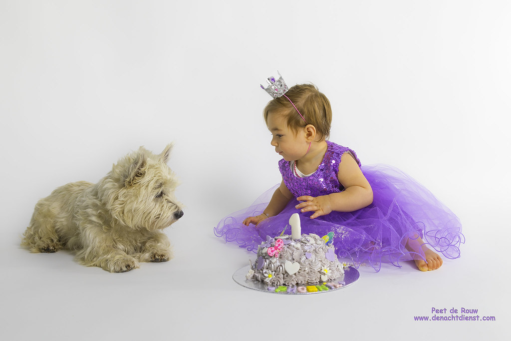 Smashing The Cake Peet De Rouw Tags Card Birthday Dog Terrier