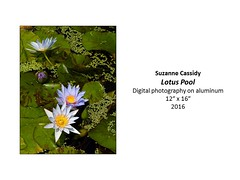 """Lotus Pool • <a style=""""font-size:0.8em;"""" href=""""https://www.flickr.com/photos/124378531@N04/31064215741/"""" target=""""_blank"""">View on Flickr</a>"""