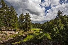 Green Stream (Matt Molloy) Tags: mattmolloy photography evergreen trees granite rocks cracks green grass stream water sky clouds burnthills frontenaccounty ontario canada landscape lovelife