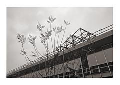 The Sublime Joy of the Subtle (Goran Patlejch) Tags: architecture construction branches leaves fall autumn prague prag praga praha blackandwhite contrast sky patlejch patlejh goenetix gntx