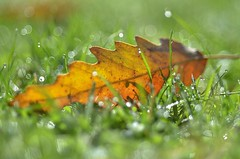autumn hit (robra shotography []O]) Tags: nature hit light leaf autumn bokeh closeup droplets wet sooc