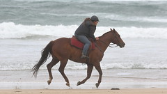 Beach Riding (blachswan) Tags: portfairy victoria australia southernocean beachriding horse gallop galloping sand beach water waves illowa illowabeach