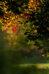 _MG_6332_web (Erik Koffmar) Tags: fall autumn colors colours october yellow red green sunshine nature landscape tree leafs greenery koffmar uppsala sweden norby orange bokeh