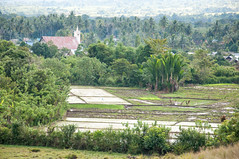 Bomba Village (Oliver J Davis Photography (ollygringo)) Tags: bomba village sulawesi indonesia asia asian southeastasia travel field farm farming rice agriculture indonesian nikon d90 palm trees palms green landscape community bada valley lorelindu church christianity