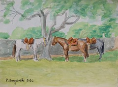 DSC05323_low (RafaelSan) Tags: horse caballos criollos watercolor acuarela uruguay
