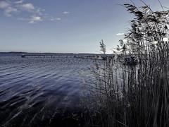 bewegtes schilf (Wunderlich, Olga) Tags: bootssteg schilf wasser himmel rügen insel mecklenburgvorpommern vorpommernrügen licht deutschland natur landschaft see