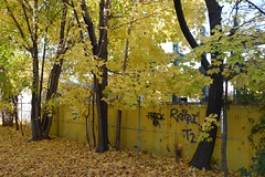 the yellow wall; (sean_o_connire) Tags: yellow wall leaves trees autumn toronto walk