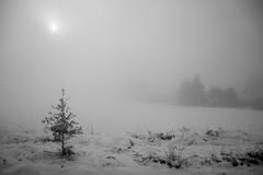 November (Hg T) Tags: november schnee snow landschaft landscape natur schwarzweis blackandwhite sonne sun pentaxk3