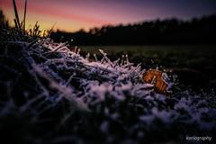 backlight (fuji x forever!) Tags: leaf sundown ice snow winter autumn colors explore cold 0degrees sunset sonnenuntergang eisblumen fujifilmxt2 xphotographer xsystem