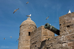 Holding the Fort, Essaouira, Morocco (Abhi_arch2001) Tags: hold fort citadel castle port seagull bird canon gun sky stone essaouira morocco moroccan fly