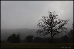 Bright sunshine on a Foggy day (Chris Sinfield) Tags: trees misty mist fog foggy surrey visitsurrey visituk countryside grey sky clouds cloud landscape wild wildlife sun sunshine