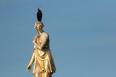 Cormorant on Diana Fountain, Bushy Park (craig.denford) Tags: diana fountain cormorant bushy park london surrey craig denford