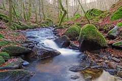 Birnam Glen and the Inchewan Burn (eric robb niven) Tags: ericrobbniven scotland dunkeld perthshire walking dundee birnam