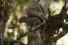 0304 (namografandosz) Tags: namografandosz nature couple travel love d3200 monteverdemg monteverde squirrel esquilo