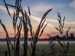 P5210766-9_1600px (Oliver Deisenroth) Tags: fog sunrise dawn nebel sonnenaufgang morgendämmerung