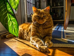 "Tigger • <a style=""font-size:0.8em;"" href=""http://www.flickr.com/photos/91306238@N04/14392186589/"" target=""_blank"">View on Flickr</a>"