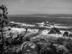 Point Lobos, California (Explored) (Javcraft) Tags: ocean trees blackandwhite bw nature water beauty landscape rocks waves