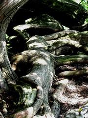 Salamander Twisting Log (K. Adam) Tags: light shadow nature contrast forest log