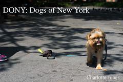 - (chartothelatte) Tags: nyc newyorkcity love dogs puppies friendship manhattan text experience d3100 humansofnewyork brandonstanton